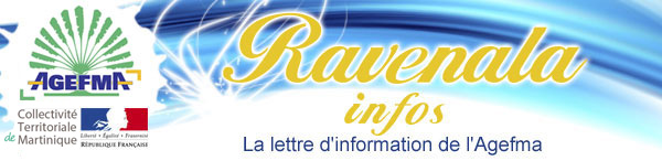 http://www.agefma.org/ravenala/images/haut.jpg